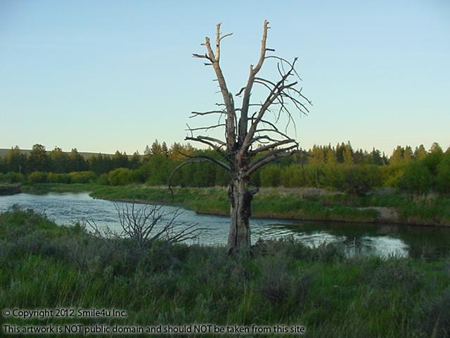 A lone tree along the Sprague River by the entrance to Lone Pine on the Sprague between Chiloquin and Sprague River, Oregon! Cute!